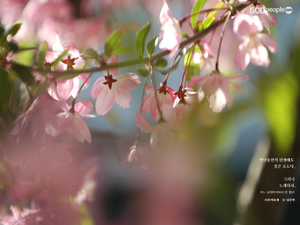 봄은 오도다