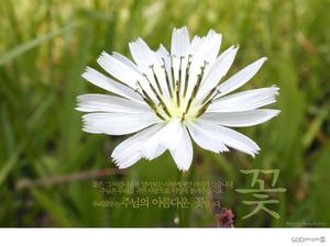주님의 아름다운 꽃