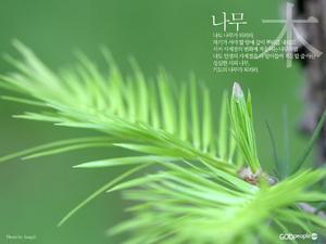 기도의 나무2